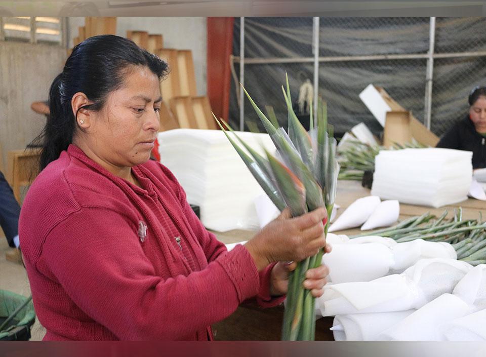 empleos en el sector agrícola