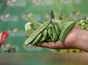 exportación de vegetales guatemaltecos