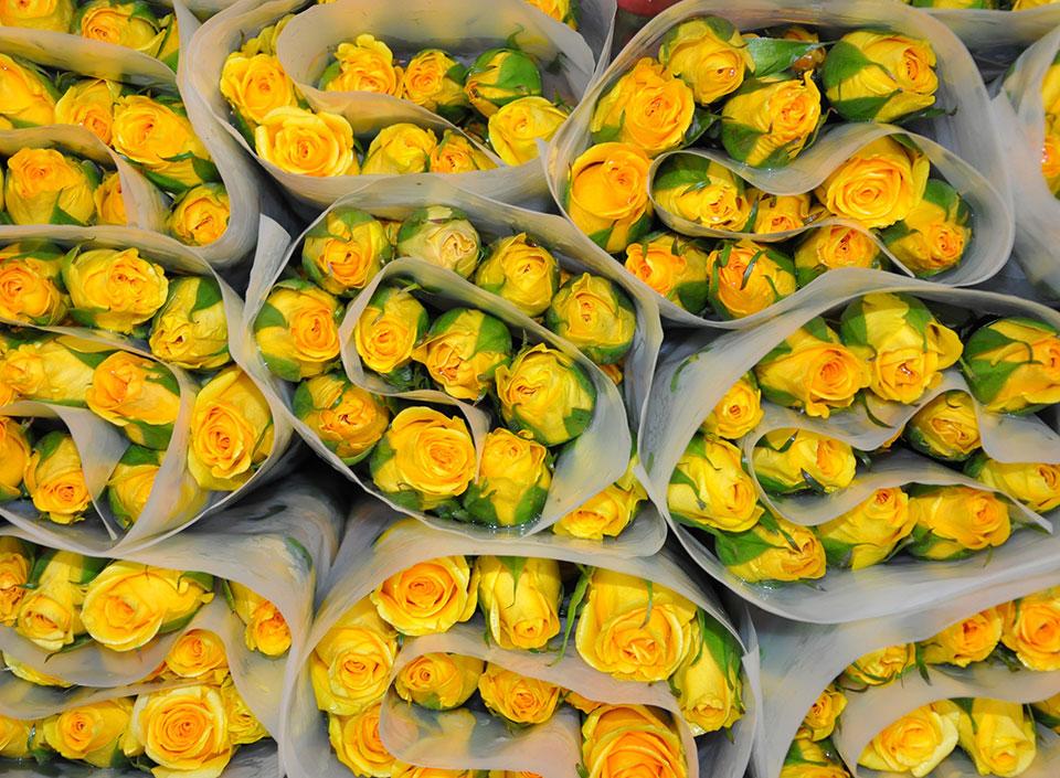 Guatemala exporta flores a Estados Unidos