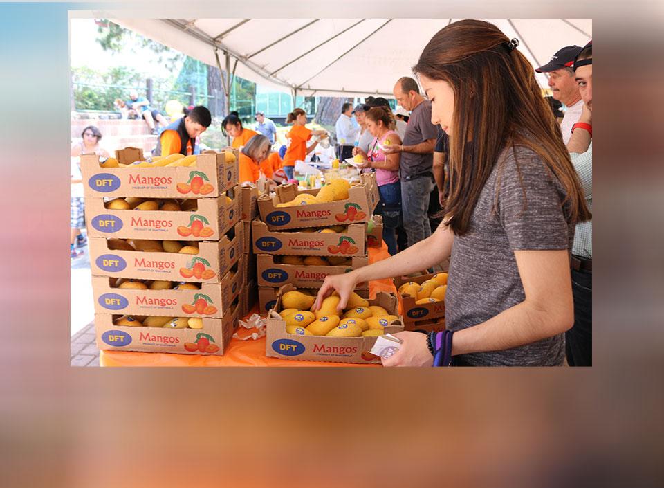 Guatemala exporta mango