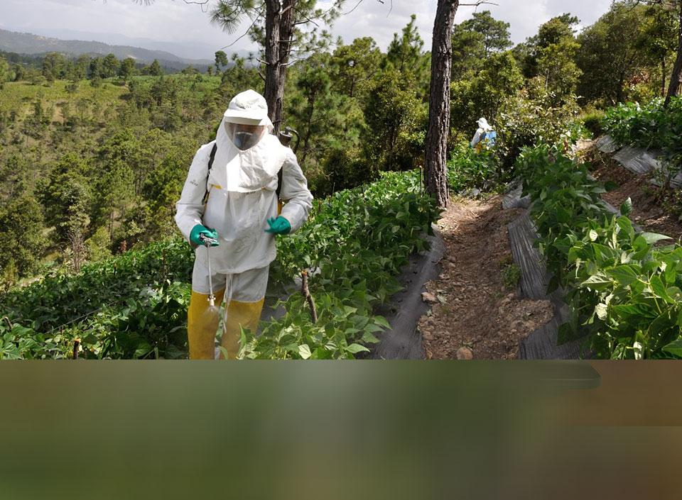 exportaciones agrícolas de Guatemala