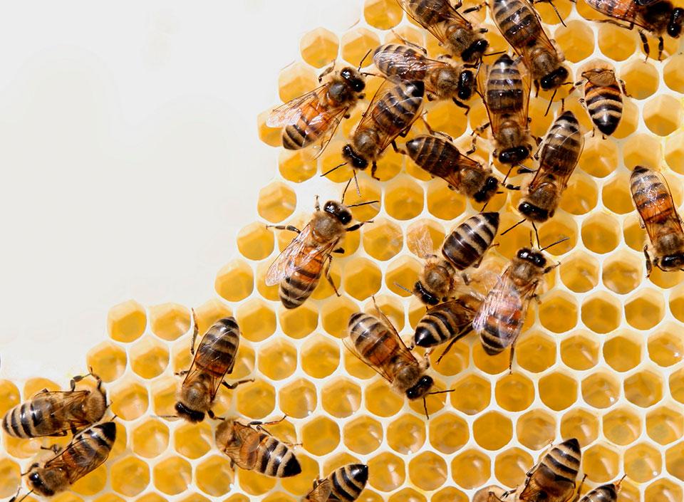 miel de abejas guatemalteca