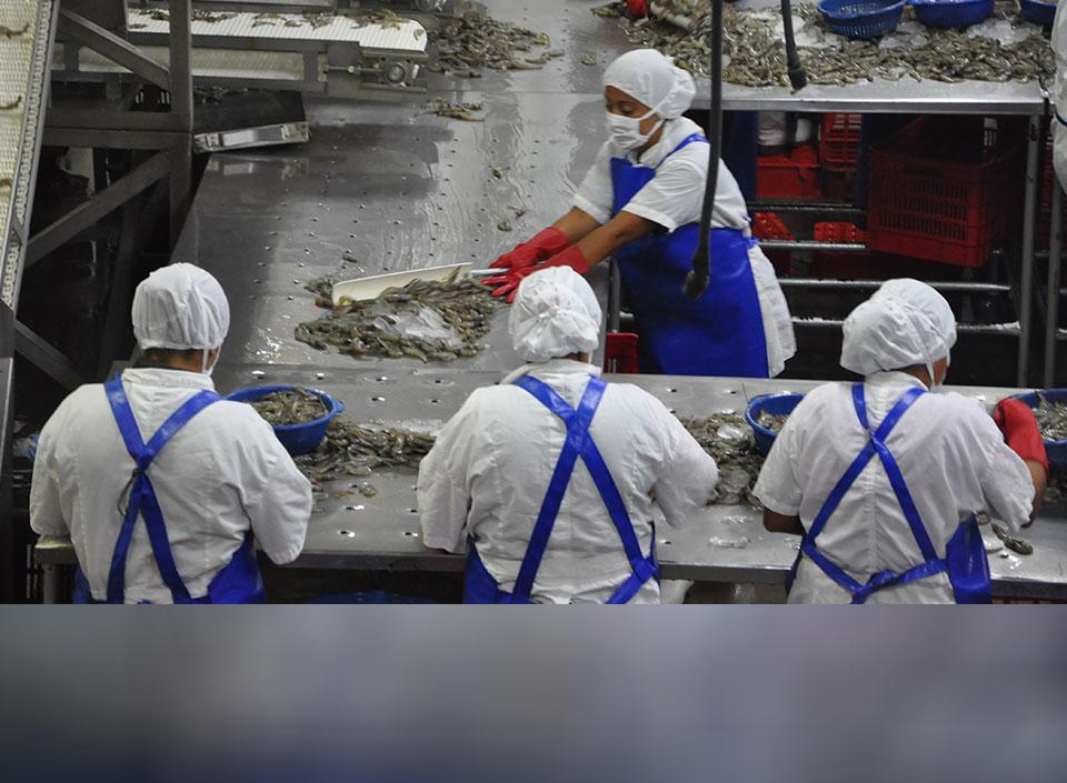 exportaciones de camarón guatemalteco