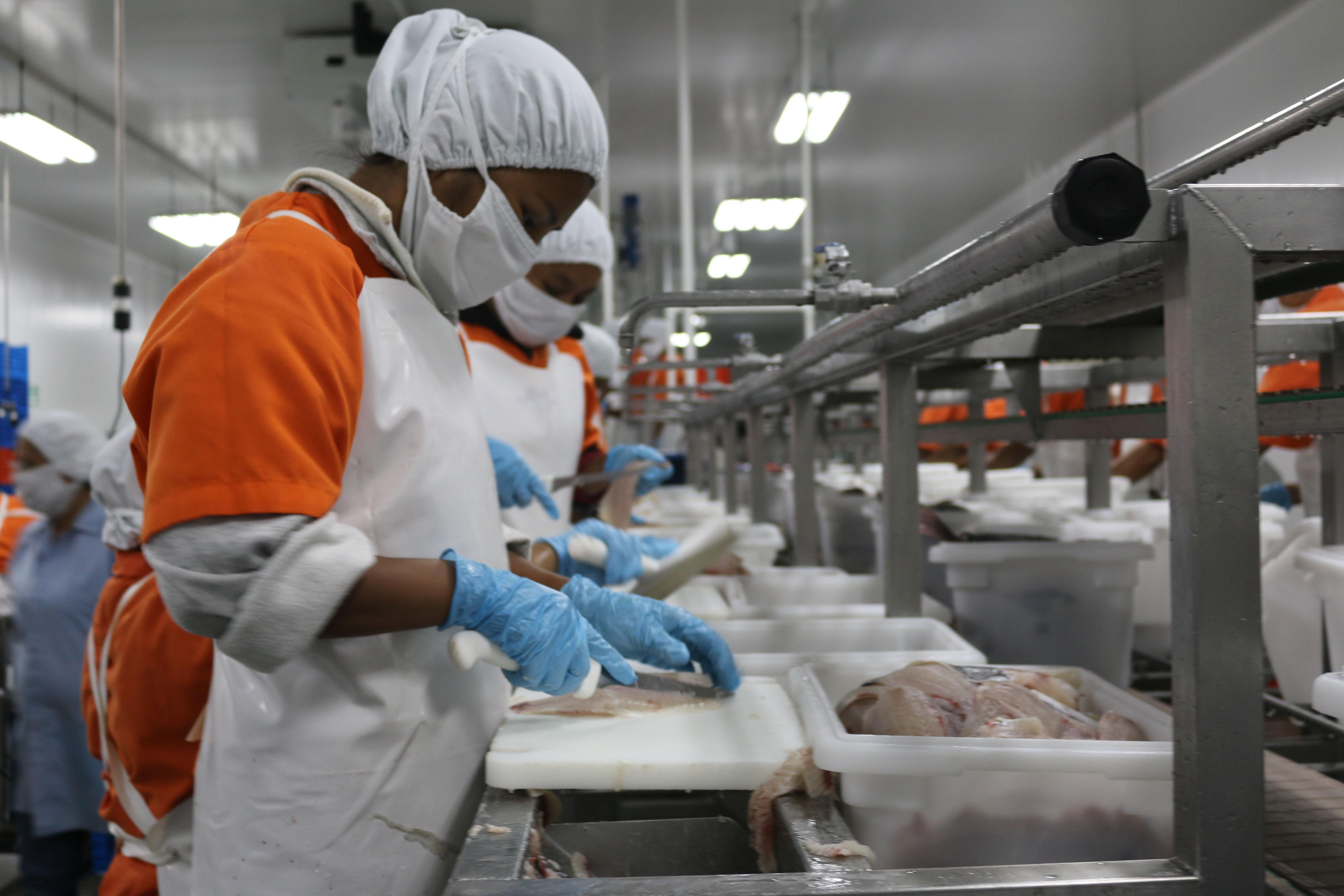 Guatemala exporta camarón y tilapia