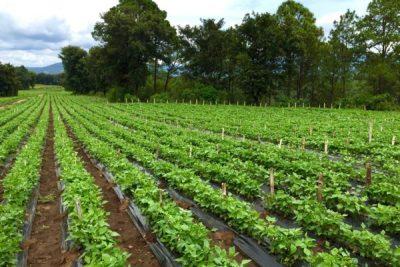 Sector agrícola exportador hace un llamado a empresas navieras