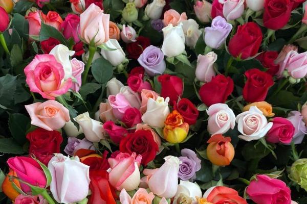 Después de prever un año marchito, sector de flores y ornamentales floreció y creció 3% en sus exportaciones 2020
