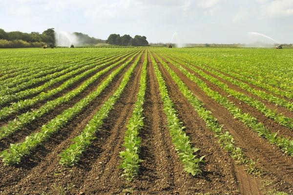 Conozca los beneficios y oportunidades de las Zonas de Desarrollo Económicas Especiales Públicas-ZDEEP-Sector Agrícola