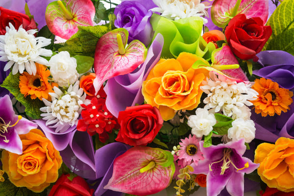 Conviértase en un experto de plantas ornamentales, follajes y flores
