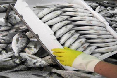 Las Industrias del Sector de Acuicultura y Pesca de AGEXPORT, las Primeras en Implementar el Sistema HACCP en Sus Plantas de Procesamiento