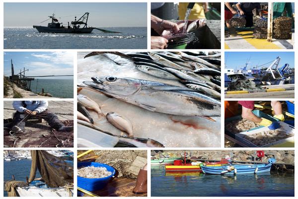Recategorización de las Industrias de la Acuicultura y la Pesca, un logro más de la Oficina del Sector para Beneficio de las Industrias