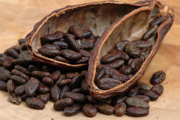 Guatemala tras la excelencia en su cacao de Exportación
