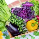 ¿Qué Esperar Durante una Inspección de la FDA en el marco de la Norma de Inocuidad de Productos Agrícolas Frescos?