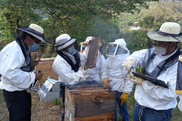 Impacto económico de las abejas melíferas y nativas en Guatemalteca