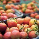 Qué es una inspección regulatoria de la Norma de Inocuidad de Productos Agrícolas Frescos de la FDA