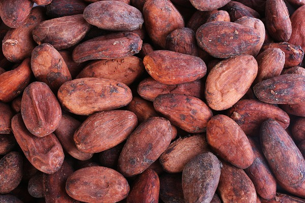 65 productores de cacao de San Marcos son apoyados para certificarse en normativa orgánica NOP/USDA